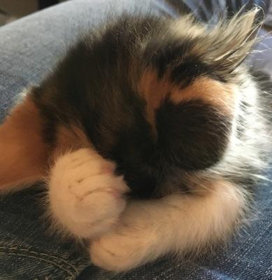 Daisy sleeping
